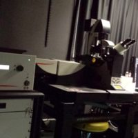 Microscope confocal SP8-STED